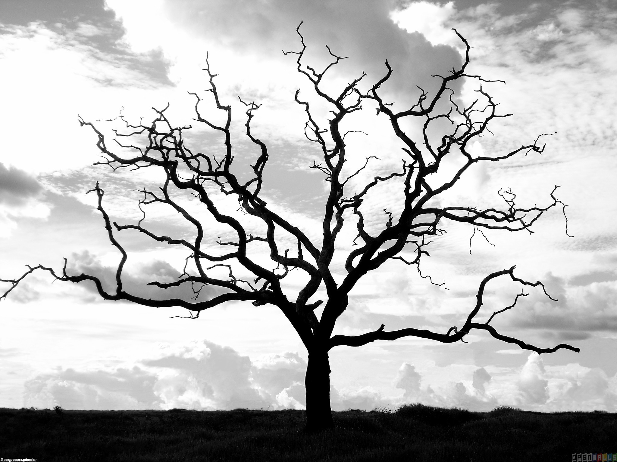 dry tree wallpaper 3
